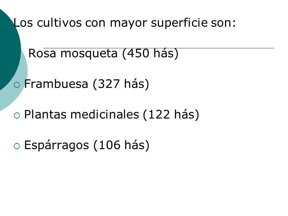 Los cultivos con mayor superficie son: Rosa mosqueta (450 hás) Frambuesa (327 hás) Plantas medicinales (122 hás) Espárragos (106 hás)