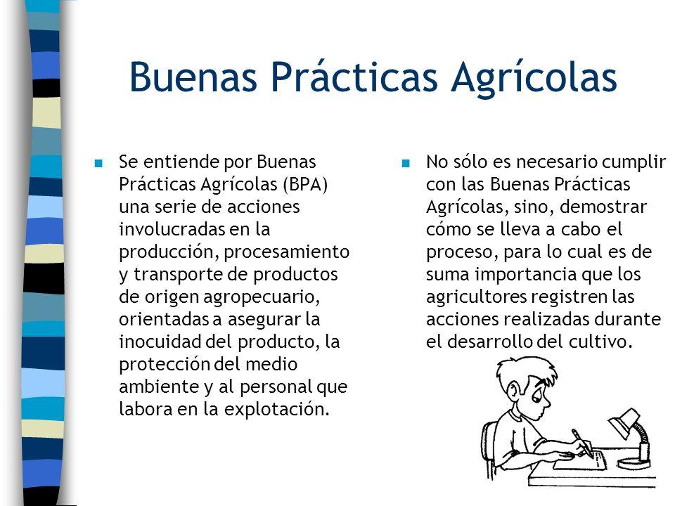Buenas Prácticas Agrícolas n Se entiende por Buenas Prácticas Agrícolas (BPA) una serie de acciones involucradas en la producción, procesamiento y tra