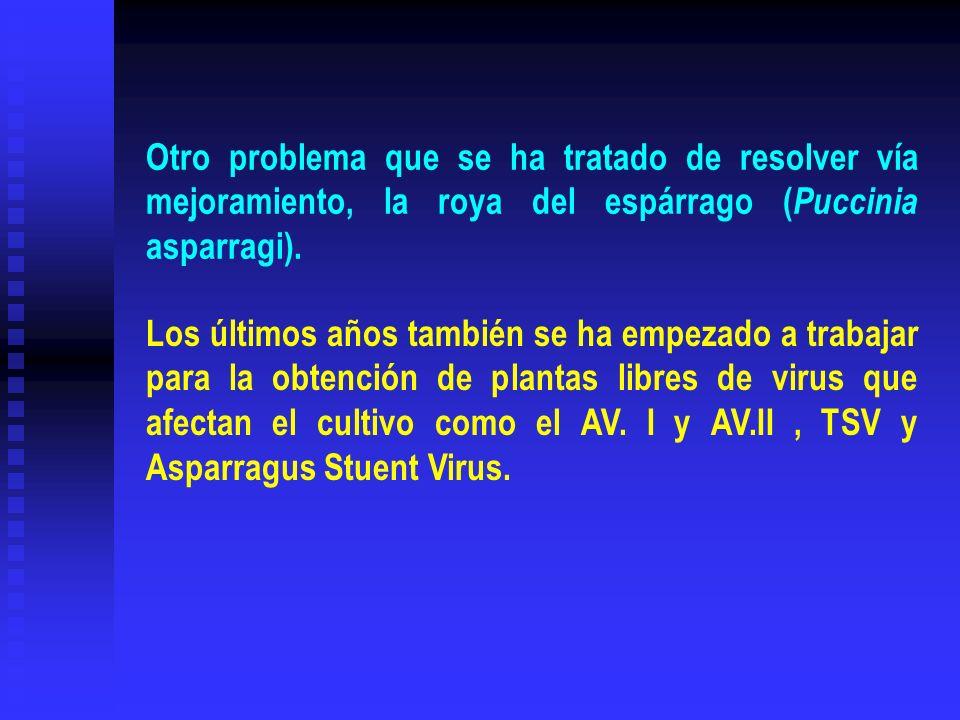 Otro problema que se ha tratado de resolver vía mejoramiento, la roya del espárrago ( Puccinia asparragi). Los últimos años también se ha empezado a t