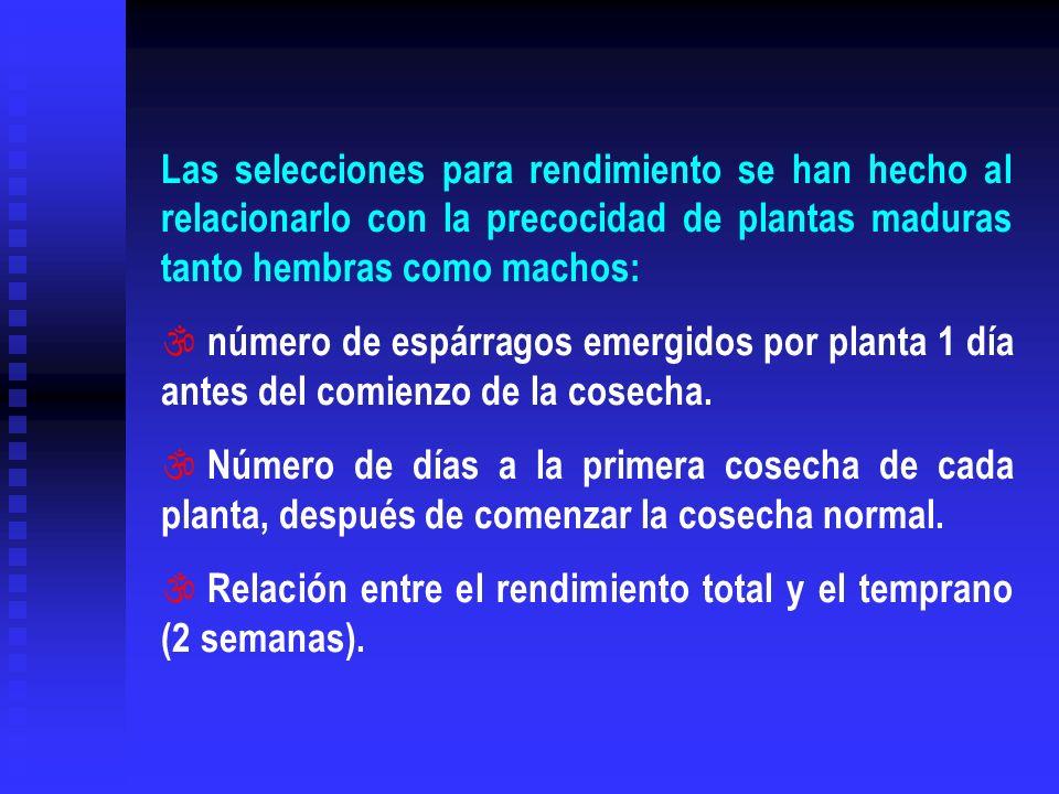 Las selecciones para rendimiento se han hecho al relacionarlo con la precocidad de plantas maduras tanto hembras como machos: \ número de espárragos e
