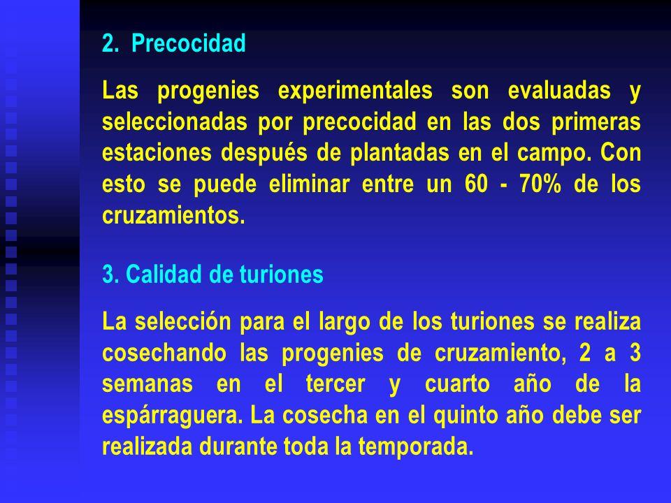 2. Precocidad Las progenies experimentales son evaluadas y seleccionadas por precocidad en las dos primeras estaciones después de plantadas en el camp