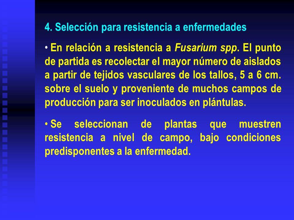 4. Selección para resistencia a enfermedades En relación a resistencia a Fusarium spp. El punto de partida es recolectar el mayor número de aislados a