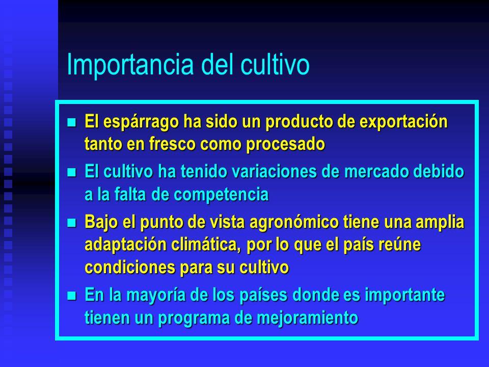 Importancia del cultivo n El espárrago ha sido un producto de exportación tanto en fresco como procesado n El cultivo ha tenido variaciones de mercado