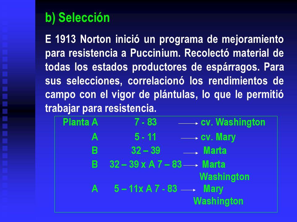 b) Selección E 1913 Norton inició un programa de mejoramiento para resistencia a Puccinium. Recolectó material de todas los estados productores de esp