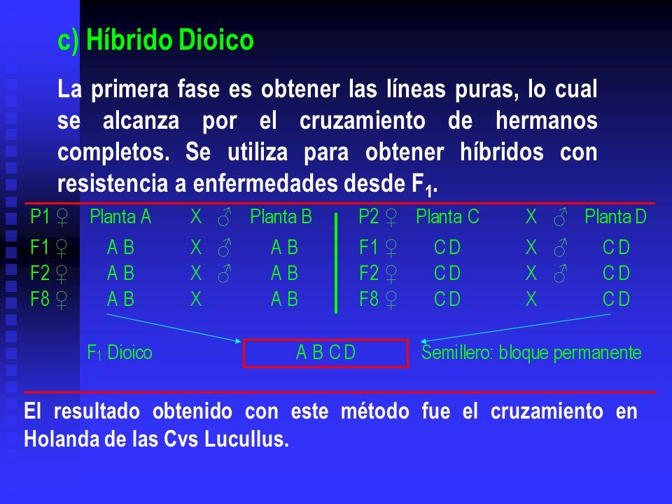 El resultado obtenido con este método fue el cruzamiento en Holanda de las Cvs Lucullus. c) Híbrido Dioico La primera fase es obtener las líneas puras