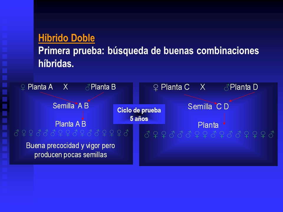 Híbrido Doble Primera prueba: búsqueda de buenas combinaciones híbridas. Ciclo de prueba 5 años