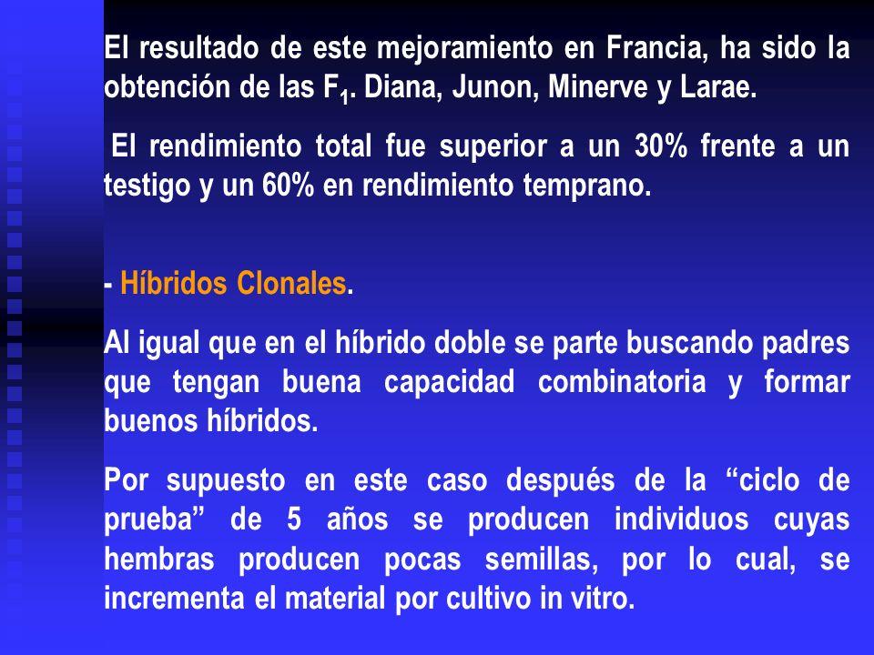 El resultado de este mejoramiento en Francia, ha sido la obtención de las F 1. Diana, Junon, Minerve y Larae. El rendimiento total fue superior a un 3