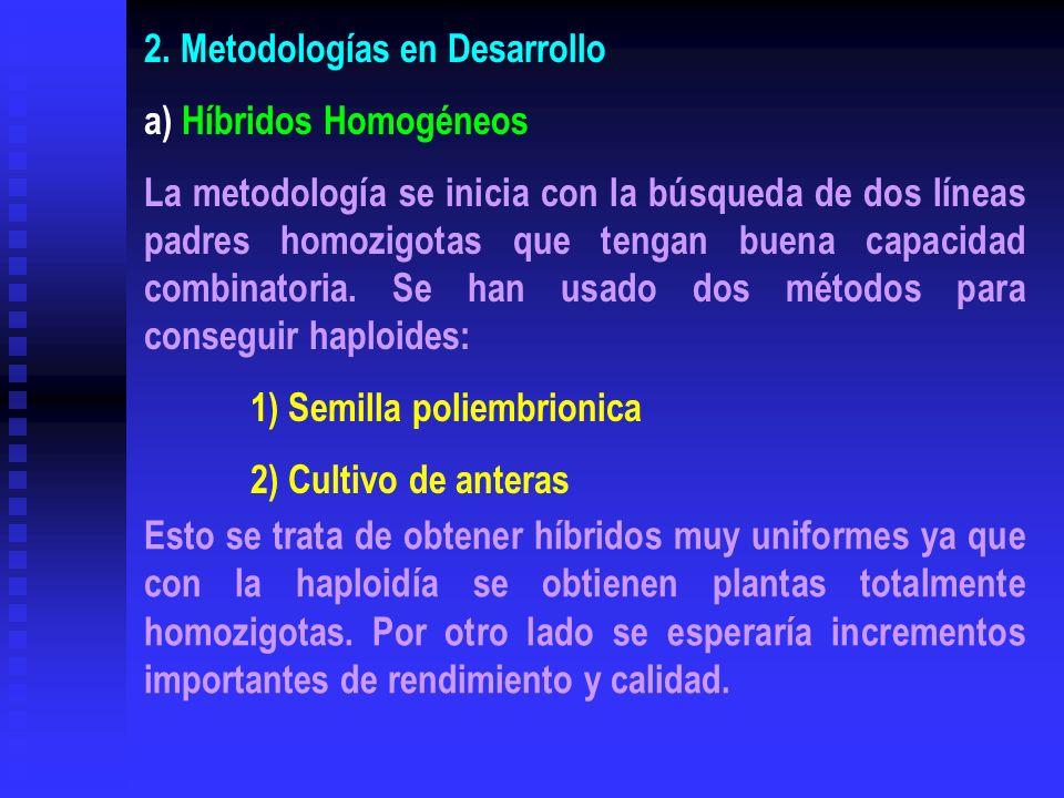 2. Metodologías en Desarrollo a) Híbridos Homogéneos La metodología se inicia con la búsqueda de dos líneas padres homozigotas que tengan buena capaci