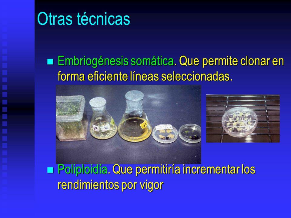 Otras técnicas n Embriogénesis somática. Que permite clonar en forma eficiente líneas seleccionadas. n Poliploidía. Que permitiría incrementar los ren