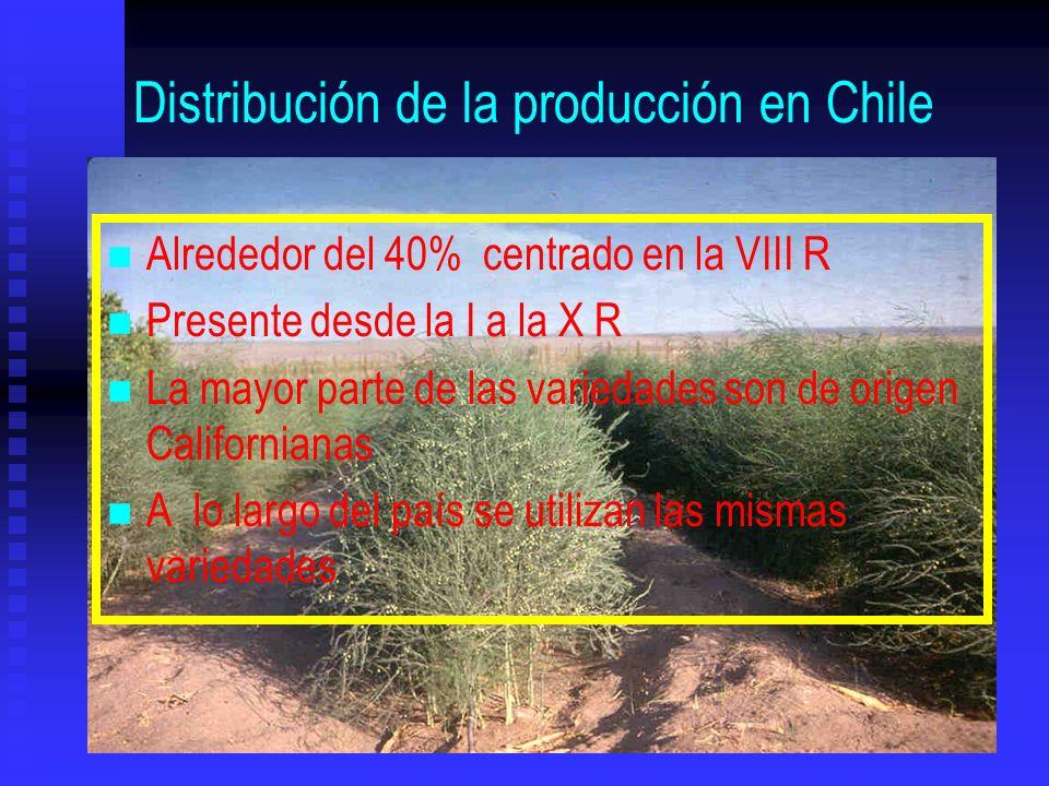 Distribución de la producción en Chile n n Alrededor del 40% centrado en la VIII R n n Presente desde la I a la X R n n La mayor parte de las variedad