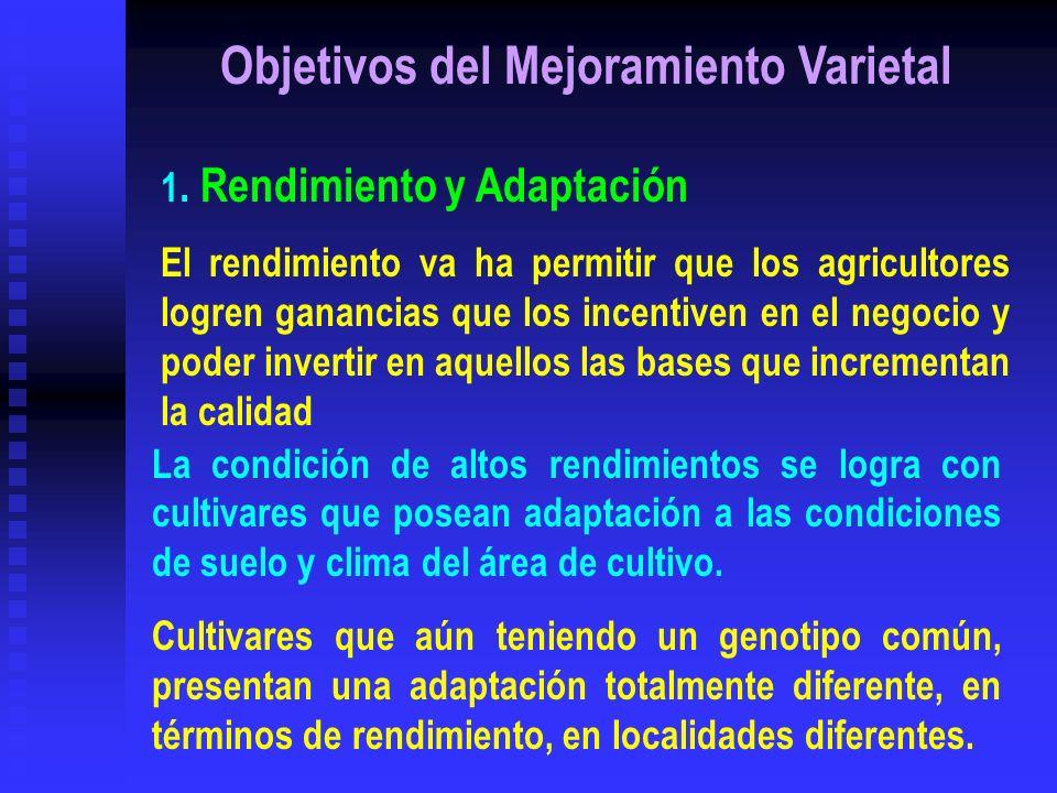 Objetivos del Mejoramiento Varietal 1. Rendimiento y Adaptación El rendimiento va ha permitir que los agricultores logren ganancias que los incentiven