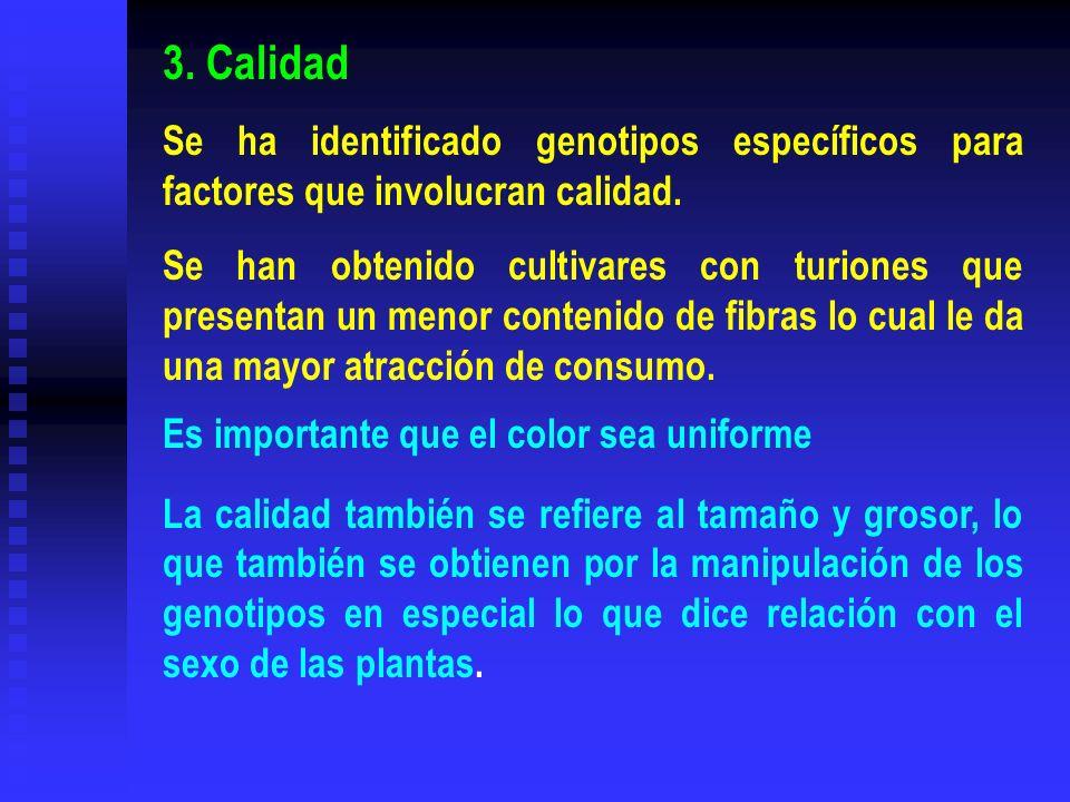 3. Calidad Se ha identificado genotipos específicos para factores que involucran calidad. Se han obtenido cultivares con turiones que presentan un men