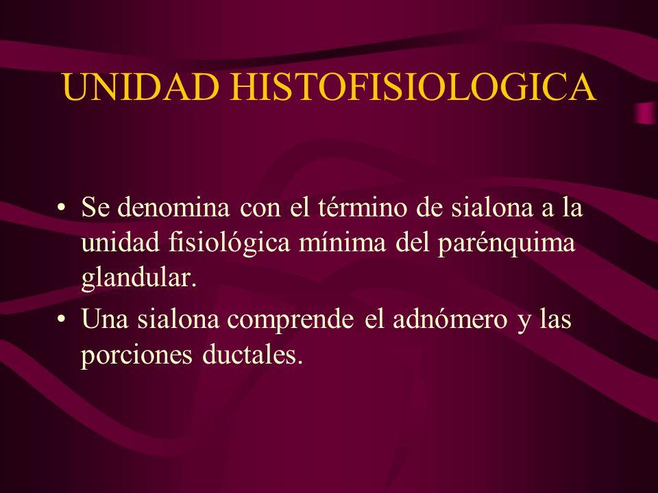 UNIDAD HISTOFISIOLOGICA Se denomina con el término de sialona a la unidad fisiológica mínima del parénquima glandular. Una sialona comprende el adnóme