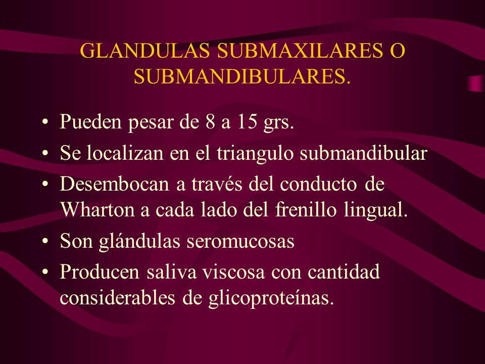GLANDULAS SUBMAXILARES O SUBMANDIBULARES. Pueden pesar de 8 a 15 grs. Se localizan en el triangulo submandibular Desembocan a través del conducto de W
