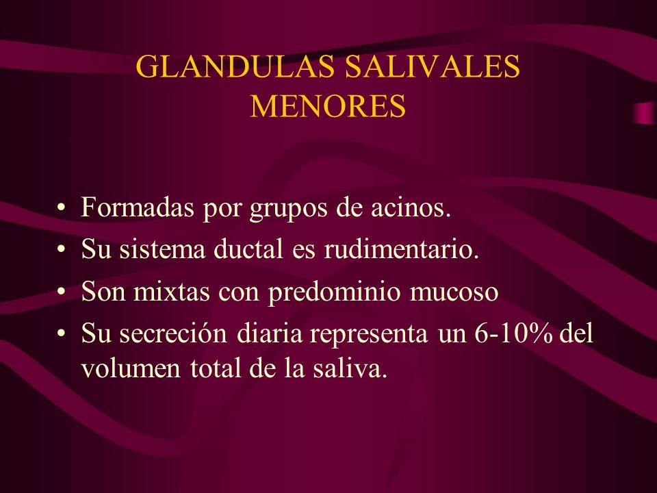 GLANDULAS SALIVALES MENORES Formadas por grupos de acinos. Su sistema ductal es rudimentario. Son mixtas con predominio mucoso Su secreción diaria rep