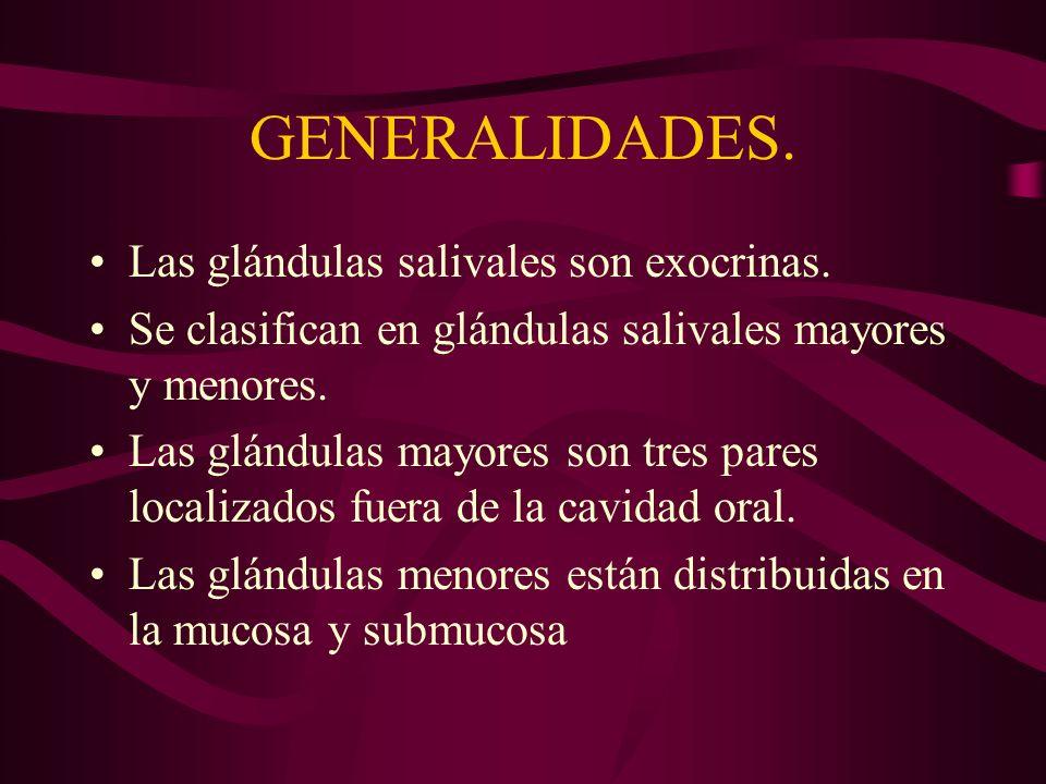 GENERALIDADES. Las glándulas salivales son exocrinas. Se clasifican en glándulas salivales mayores y menores. Las glándulas mayores son tres pares loc