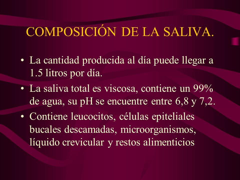 COMPOSICIÓN DE LA SALIVA. La cantidad producida al día puede llegar a 1.5 litros por día. La saliva total es viscosa, contiene un 99% de agua, su pH s