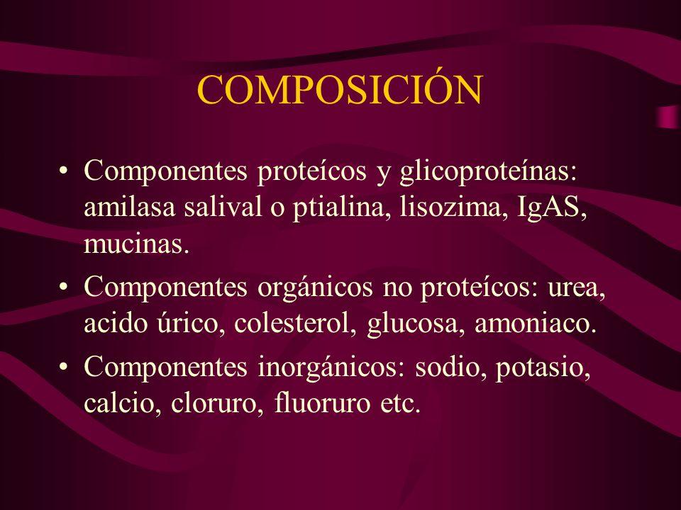 COMPOSICIÓN Componentes proteícos y glicoproteínas: amilasa salival o ptialina, lisozima, IgAS, mucinas. Componentes orgánicos no proteícos: urea, aci