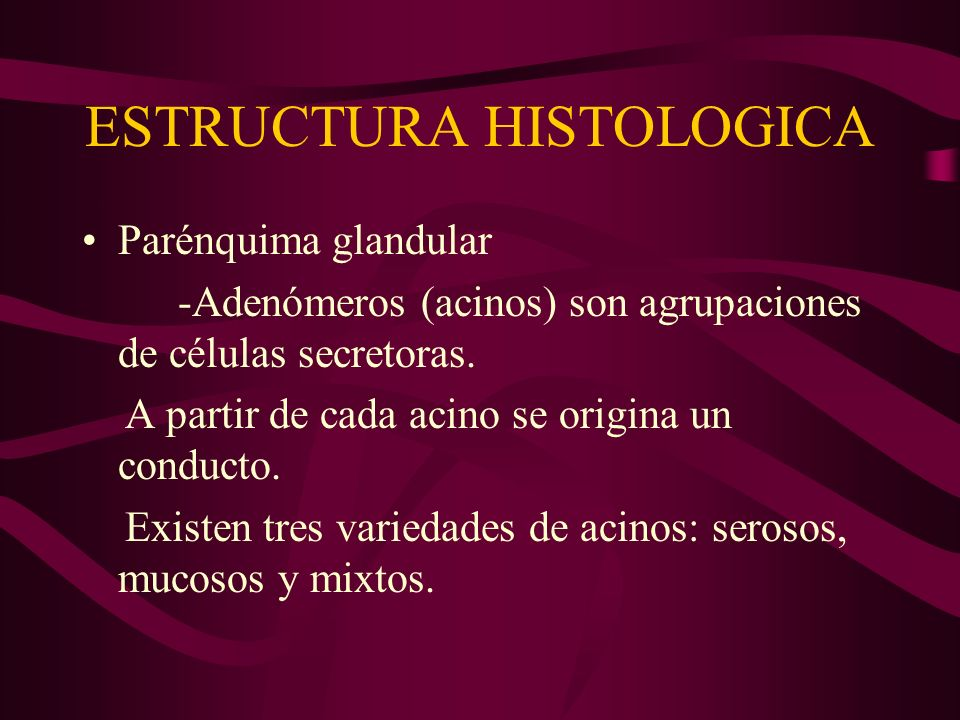 ESTRUCTURA HISTOLOGICA Parénquima glandular -Adenómeros (acinos) son agrupaciones de células secretoras. A partir de cada acino se origina un conducto