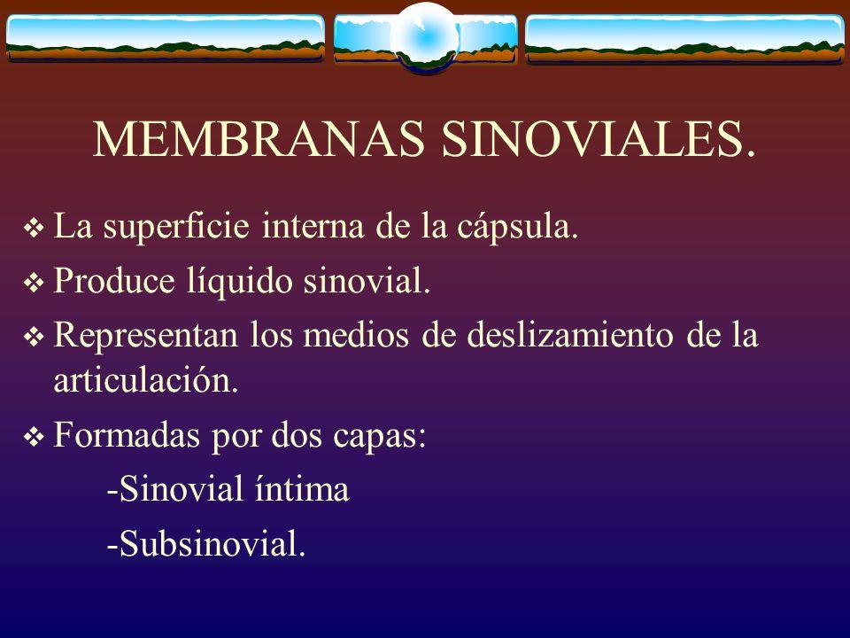 MEMBRANAS SINOVIALES.La superficie interna de la cápsula.