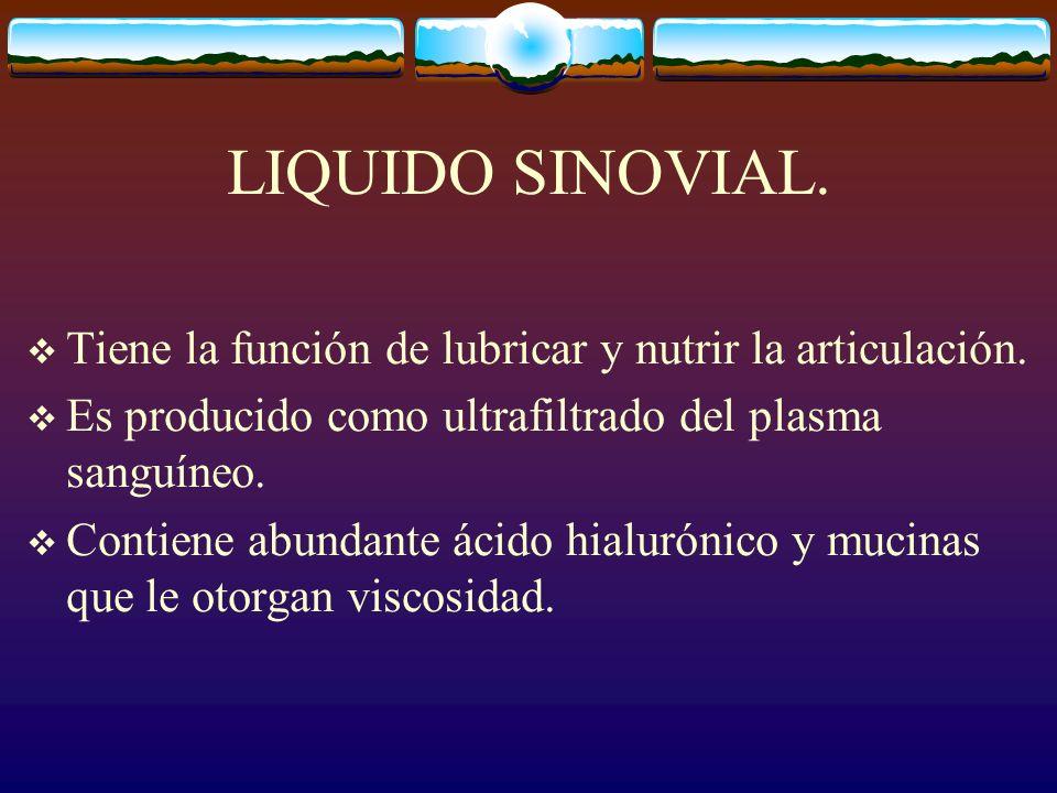 LIQUIDO SINOVIAL.Tiene la función de lubricar y nutrir la articulación.