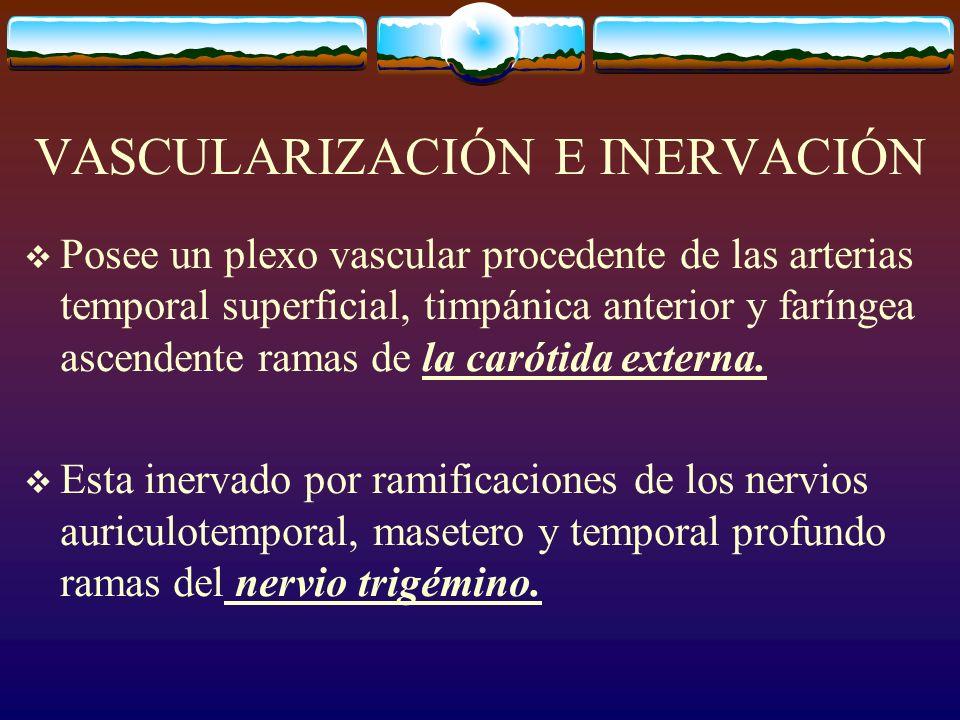 VASCULARIZACIÓN E INERVACIÓN Posee un plexo vascular procedente de las arterias temporal superficial, timpánica anterior y faríngea ascendente ramas de la carótida externa.