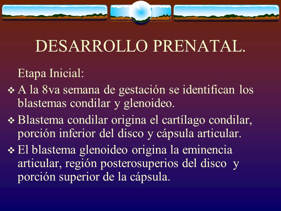 DESARROLLO PRENATAL. Etapa Inicial: A la 8va semana de gestación se identifican los blastemas condilar y glenoideo. Blastema condilar origina el cartí