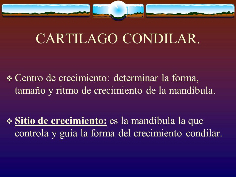 CARTILAGO CONDILAR.