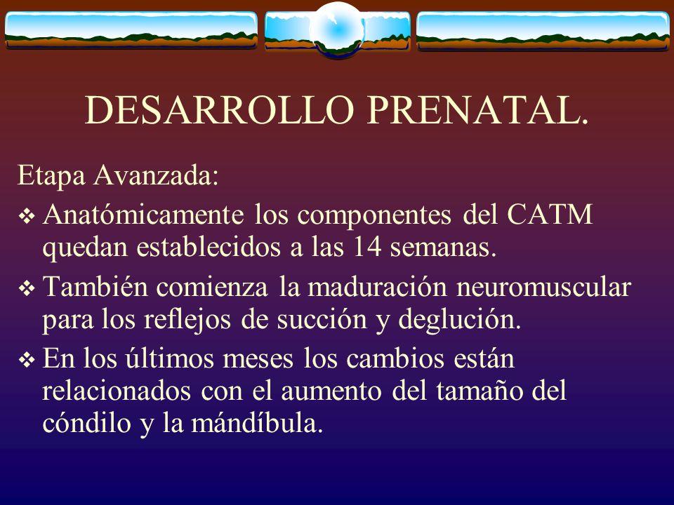 DESARROLLO PRENATAL. Etapa Avanzada: Anatómicamente los componentes del CATM quedan establecidos a las 14 semanas. También comienza la maduración neur