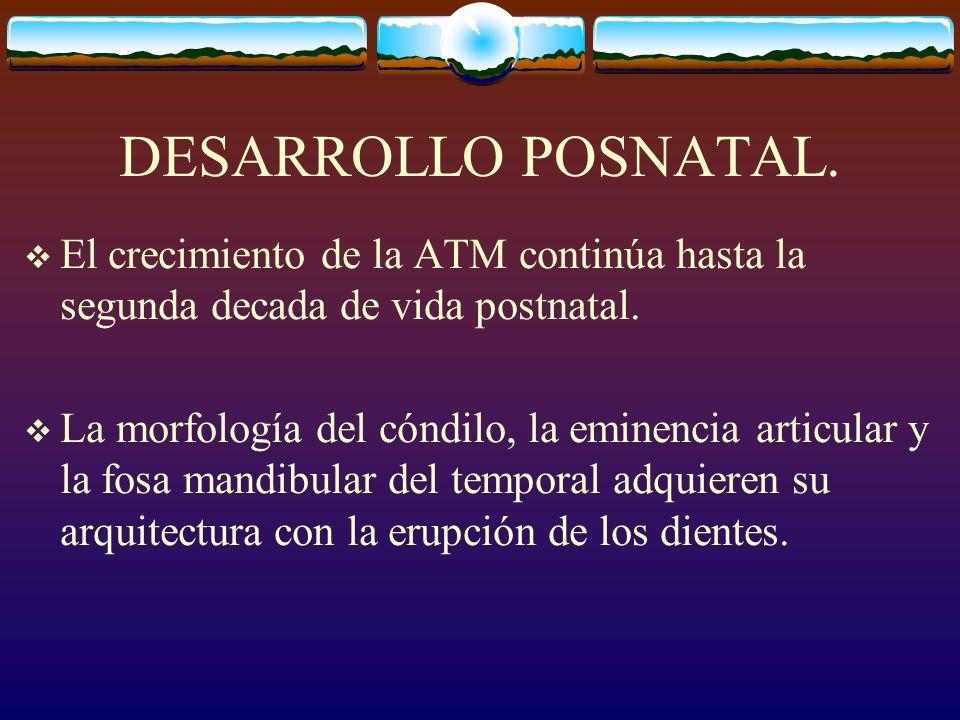 DESARROLLO POSNATAL.El crecimiento de la ATM continúa hasta la segunda decada de vida postnatal.