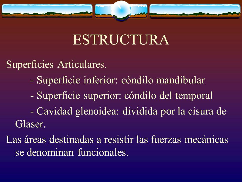 ESTRUCTURA Superficies Articulares. - Superficie inferior: cóndilo mandibular - Superficie superior: cóndilo del temporal - Cavidad glenoidea: dividid