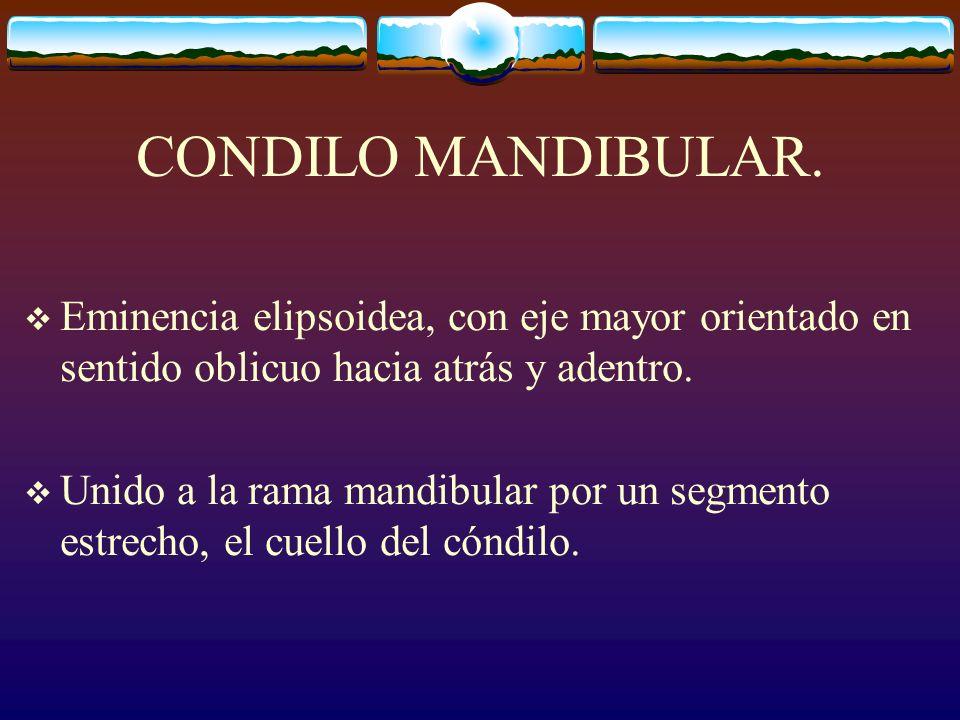 CONDILO MANDIBULAR.