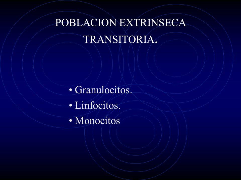 POBLACION EXTRINSECA TRANSITORIA. Granulocitos. Linfocitos. Monocitos
