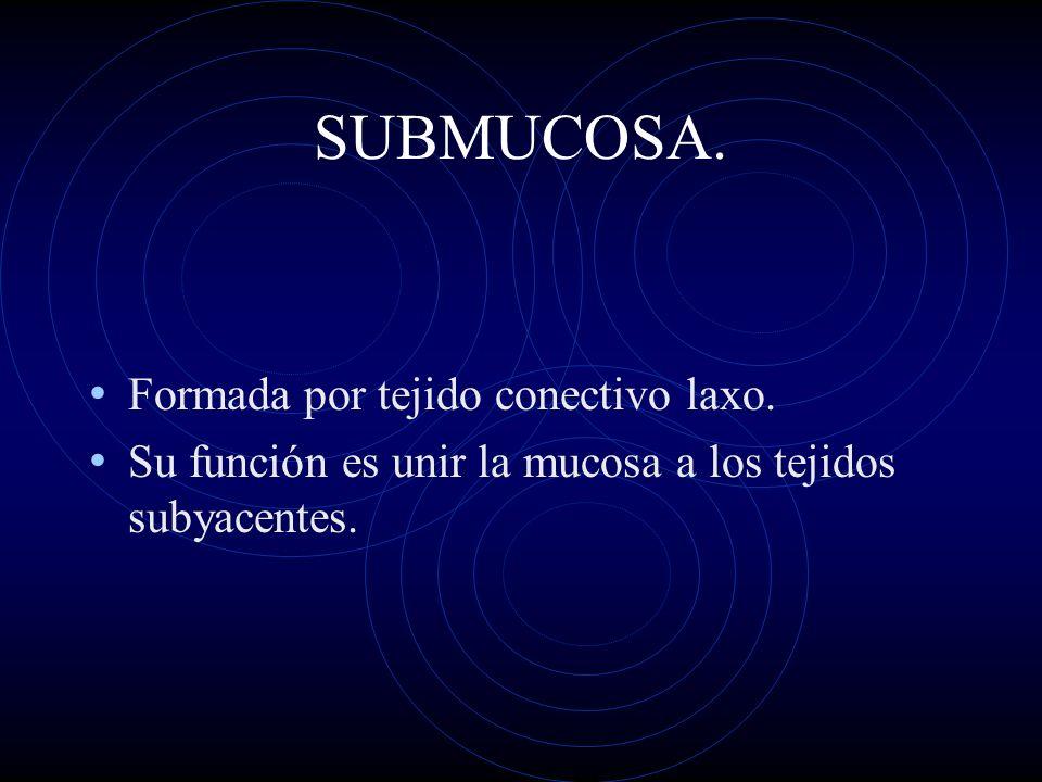 SUBMUCOSA. Formada por tejido conectivo laxo. Su función es unir la mucosa a los tejidos subyacentes.
