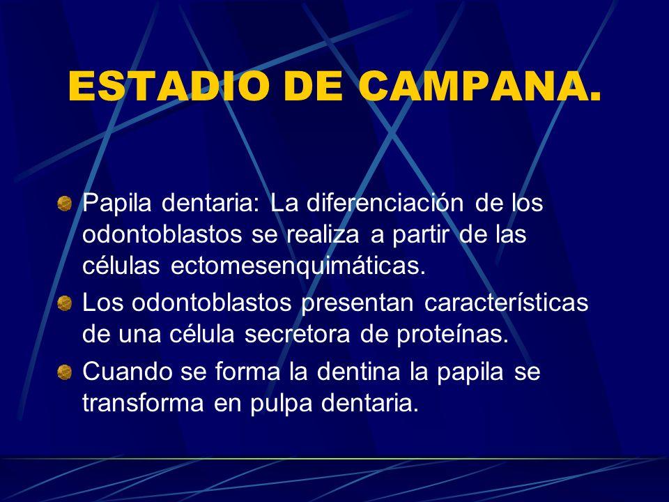 ESTADIO DE CAMPANA.