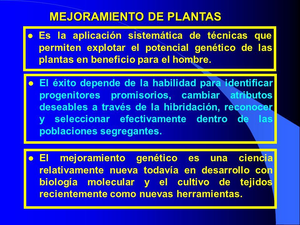 l Es la aplicación sistemática de técnicas que permiten explotar el potencial genético de las plantas en beneficio para el hombre. MEJORAMIENTO DE PLA