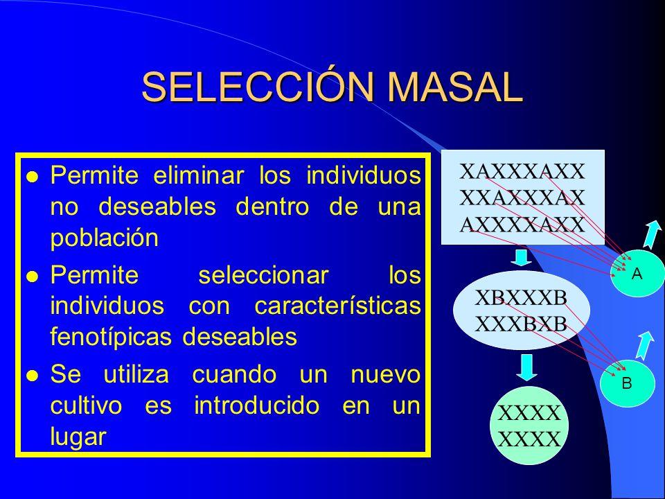 SELECCIÓN MASAL l Permite eliminar los individuos no deseables dentro de una población l Permite seleccionar los individuos con características fenotí