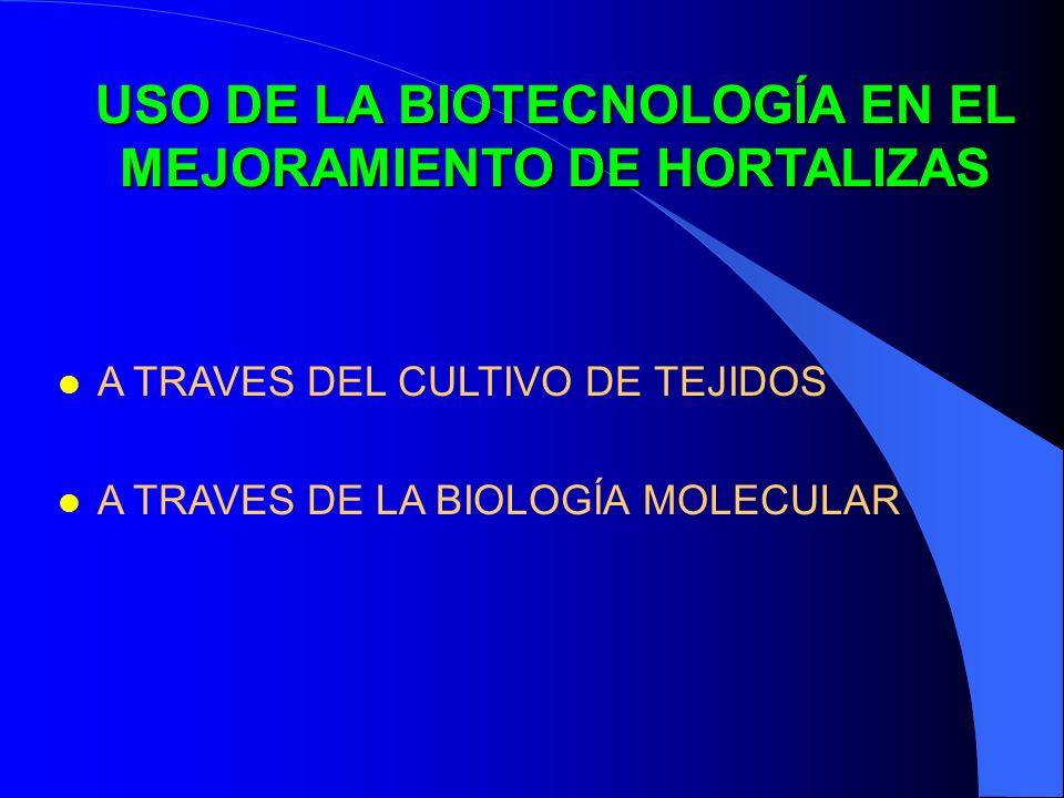 USO DE LA BIOTECNOLOGÍA EN EL MEJORAMIENTO DE HORTALIZAS l A TRAVES DEL CULTIVO DE TEJIDOS l A TRAVES DE LA BIOLOGÍA MOLECULAR