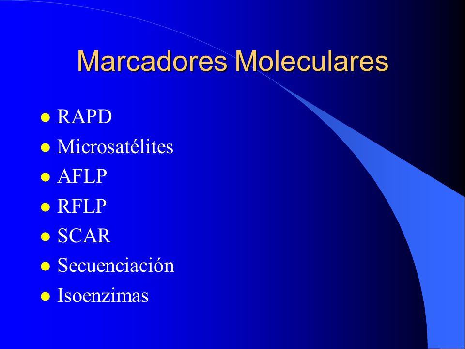 Marcadores Moleculares l RAPD l Microsatélites l AFLP l RFLP l SCAR l Secuenciación l Isoenzimas