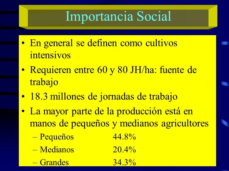 Importancia Social En general se definen como cultivos intensivos Requieren entre 60 y 80 JH/ha: fuente de trabajo 18.3 millones de jornadas de trabaj
