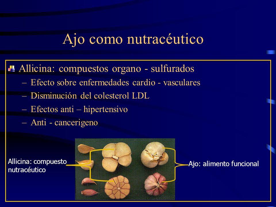 Ajo como nutracéutico Allicina: compuestos organo - sulfurados –Efecto sobre enfermedades cardio - vasculares –Disminución del colesterol LDL –Efectos