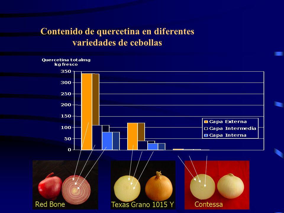 Contenido de quercetina en diferentes variedades de cebollas Red Bone Texas Grano 1015 Y Contessa