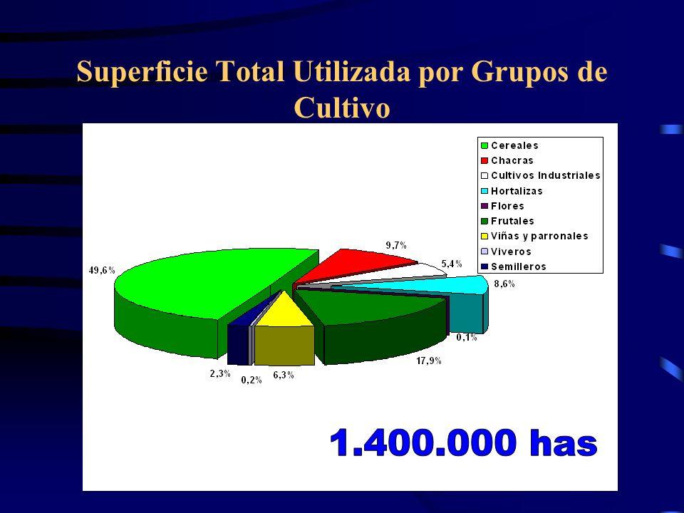 Superficie Total Utilizada por Grupos de Cultivo
