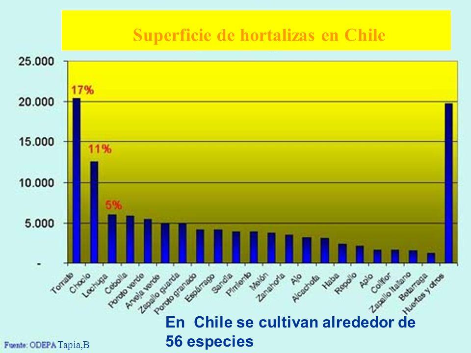 En Chile se cultivan alrededor de 56 especies Superficie de hortalizas en Chile