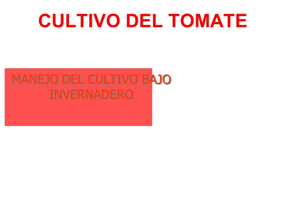CULTIVO DEL TOMATE MANEJO DEL CULTIVO BAJO INVERNADERO