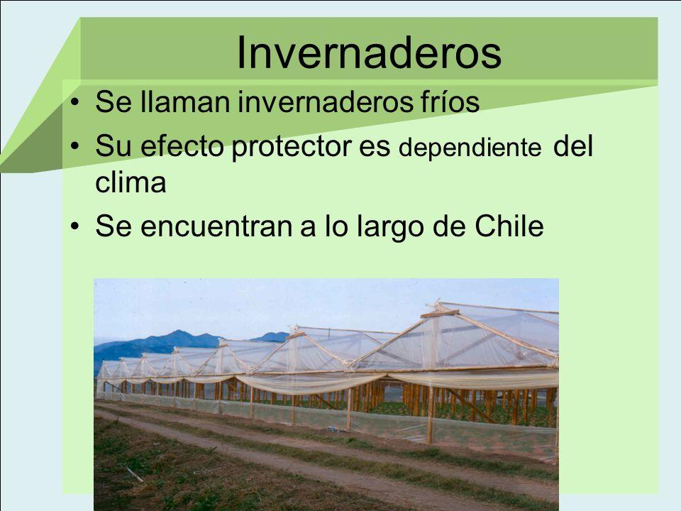Invernaderos Se llaman invernaderos fríos Su efecto protector es dependiente del clima Se encuentran a lo largo de Chile