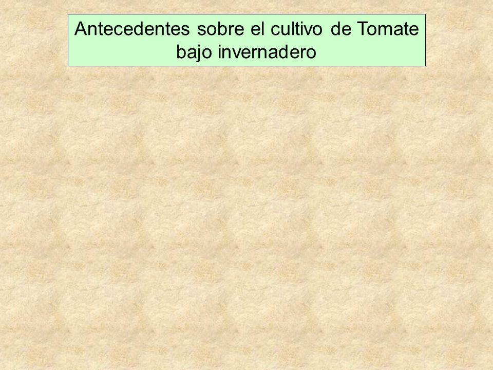 Antecedentes sobre el cultivo de Tomate bajo invernadero