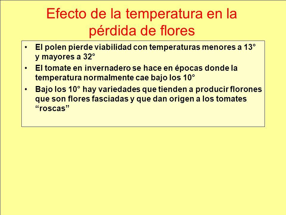 Efecto de la temperatura en la pérdida de flores El polen pierde viabilidad con temperaturas menores a 13° y mayores a 32° El tomate en invernadero se hace en épocas donde la temperatura normalmente cae bajo los 10° Bajo los 10° hay variedades que tienden a producir florones que son flores fasciadas y que dan origen a los tomates roscas