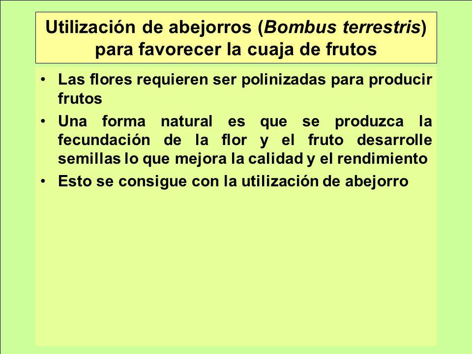 Utilización de abejorros (Bombus terrestris) para favorecer la cuaja de frutos Las flores requieren ser polinizadas para producir frutos Una forma natural es que se produzca la fecundación de la flor y el fruto desarrolle semillas lo que mejora la calidad y el rendimiento Esto se consigue con la utilización de abejorro