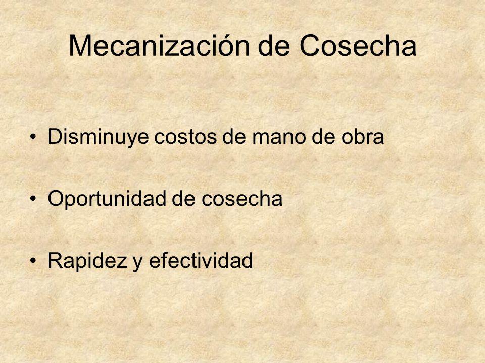 Mecanización de Cosecha Disminuye costos de mano de obra Oportunidad de cosecha Rapidez y efectividad